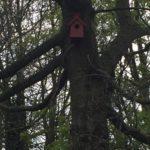 Case Studies: Cinnamon Lane Bird's Nest in Nature